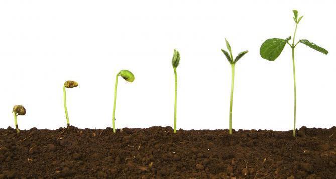 прорастание растения из семени