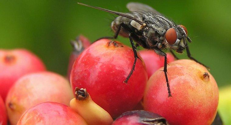 муха переносчик опасных заболеваний