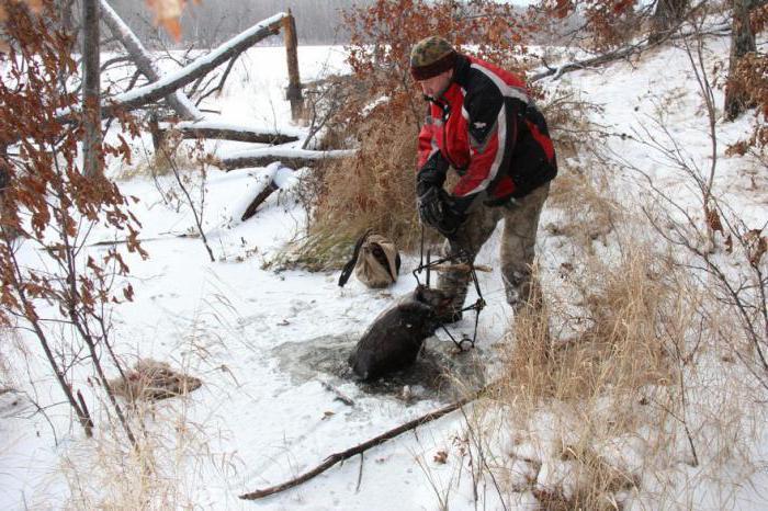 как поймать бобра капканом осенью