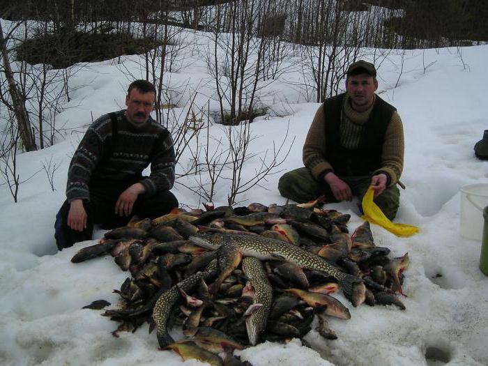 костромская область охота на лося