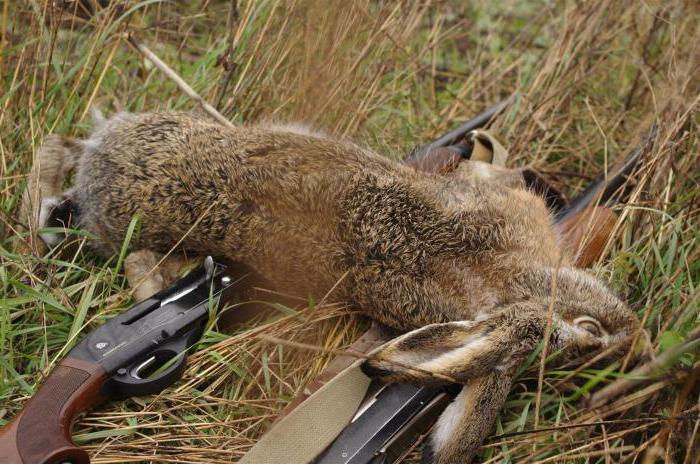 охота в костромской области цены