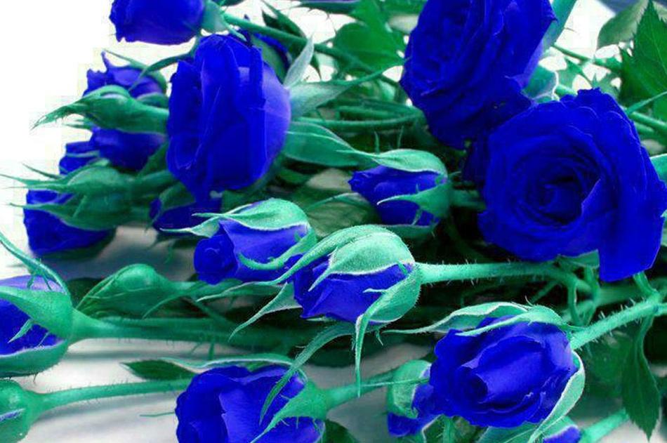 Открытка синие цветы
