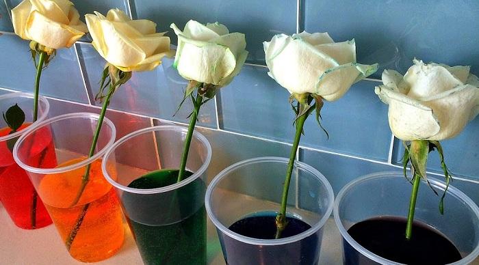 Картинки по запросу Как покрасить розу