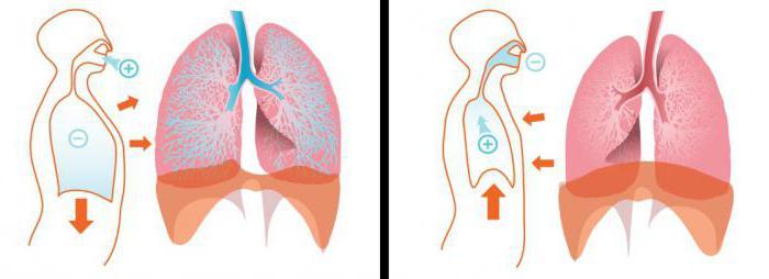 Экскурсия грудной клетки