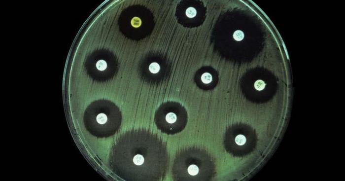 Анализ на чувствительность к антибиотикам 28