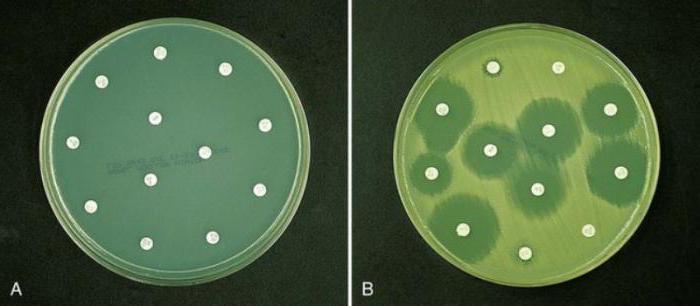 Анализ на чувствительность к антибиотикам 29