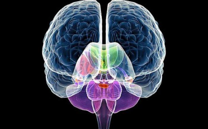 деятельностью нервной системы центральной