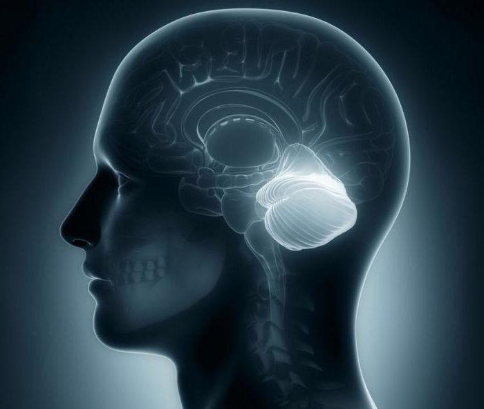 цнс центральная нервная система