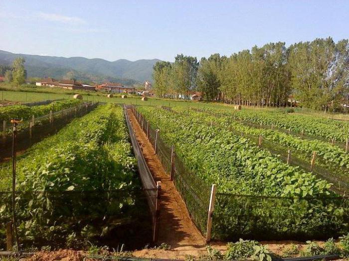 фермы по выращиванию виноградных улиток