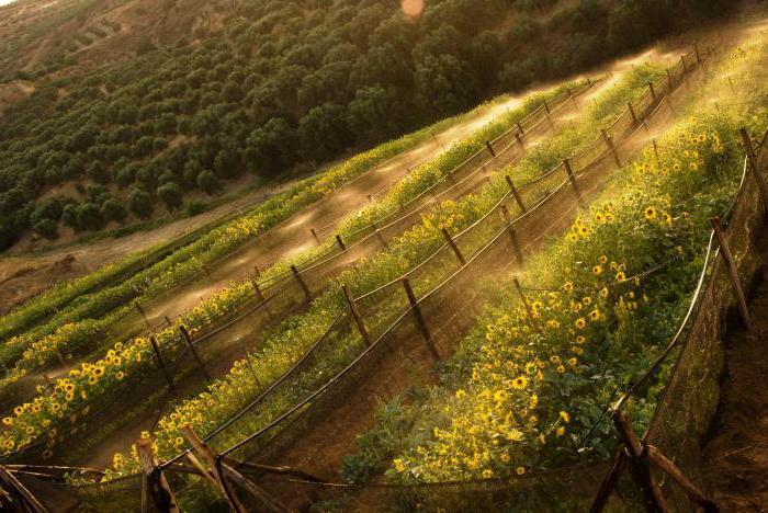 Улитка виноградная: разведение, условия содержания. Улиточная ферма