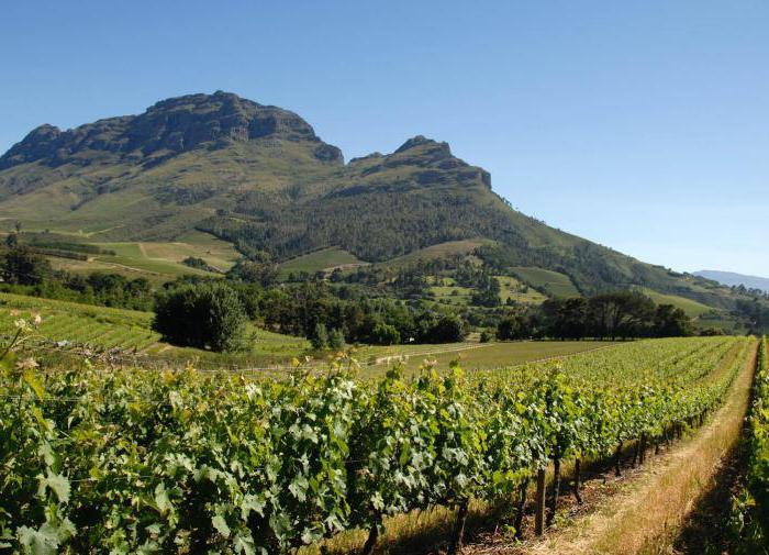 Вина ЮАР: отзывы