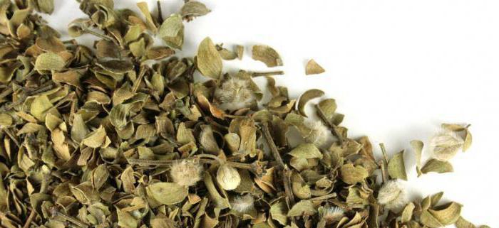 листья крапивы полезные свойства и противопоказания