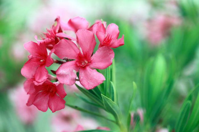 Ядовитые цветы