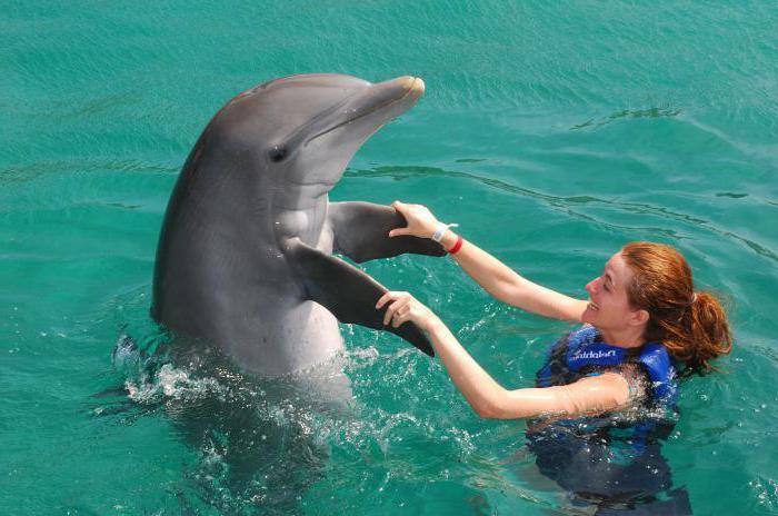 Музыка дельфинов для беременных 82