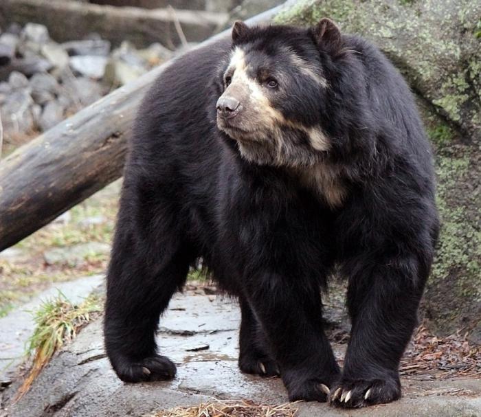 Фото голого лысого медведя 12 фотография