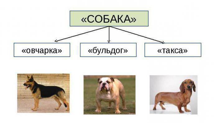 Тематические группы слов: примеры