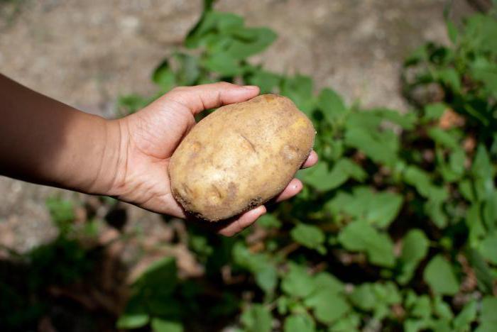 Сажать картошку во сне с покойником