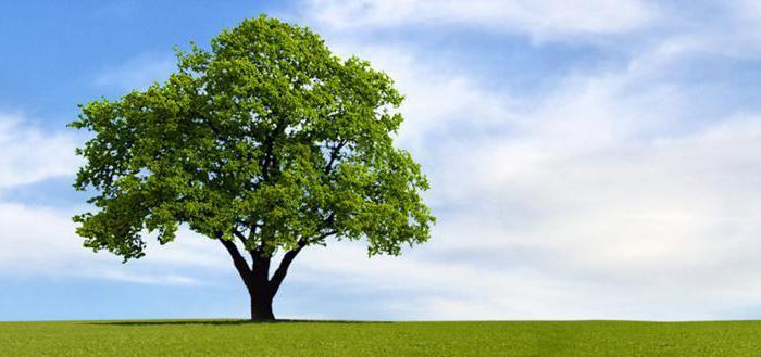 фото дерево