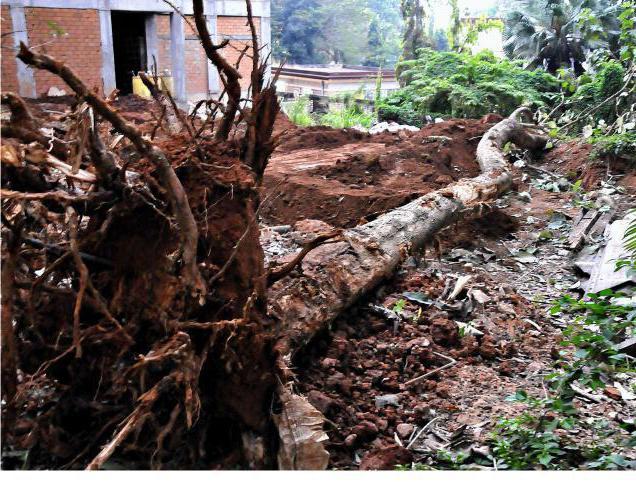 разрешение на вырубку деревьев