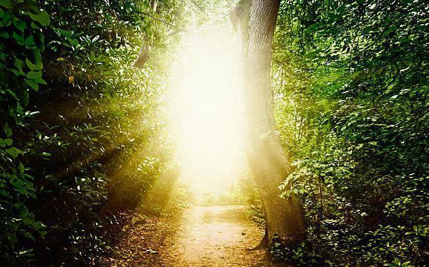 свет в жизни человека