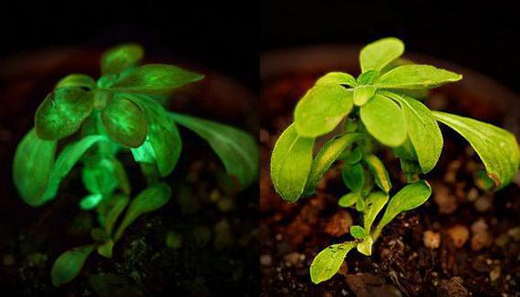 свет в жизни растений
