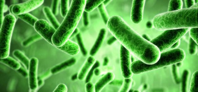 Чем питаются бактерии в организме человека