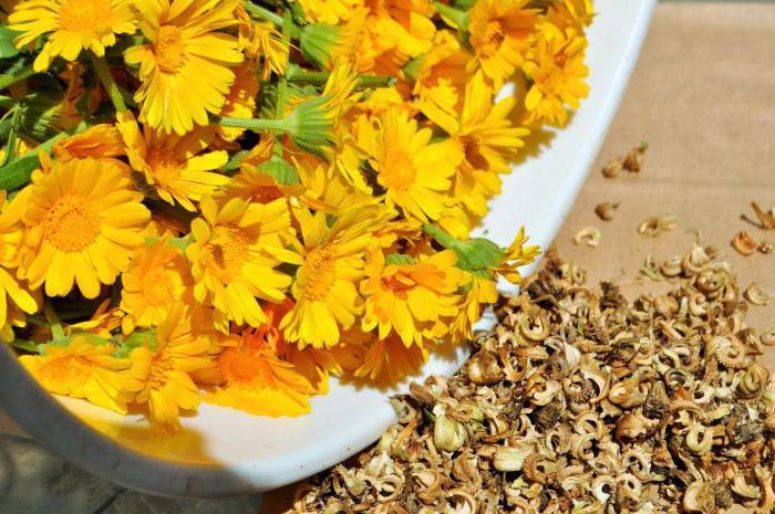цветы календулы лечебные свойства и противопоказания