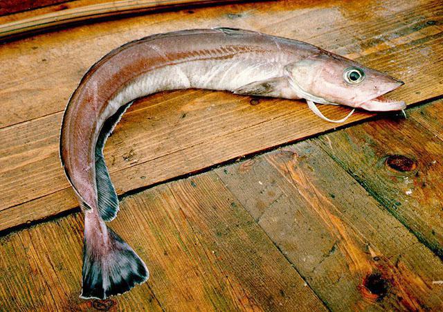 ловля щуки получи и распишись морскую рыбу