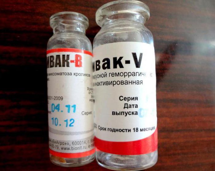 вакцинация кроликов от миксоматоза и вгбк инструкция - фото 11