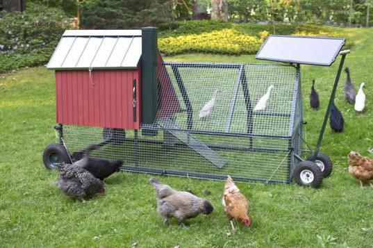 очень Мини бизнес идеи для начинающих с животными лежит вон