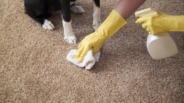 Чем очистить ковер