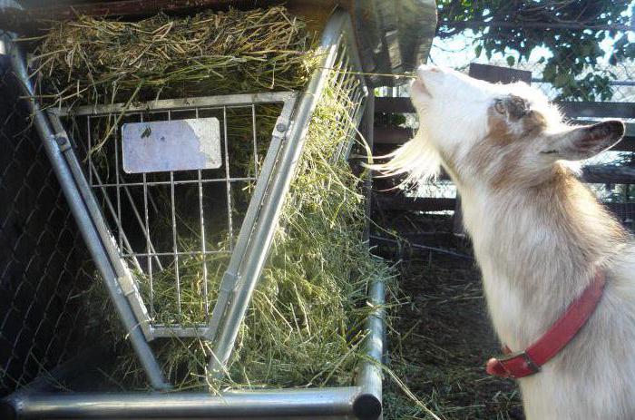 Ñ'рава для коз