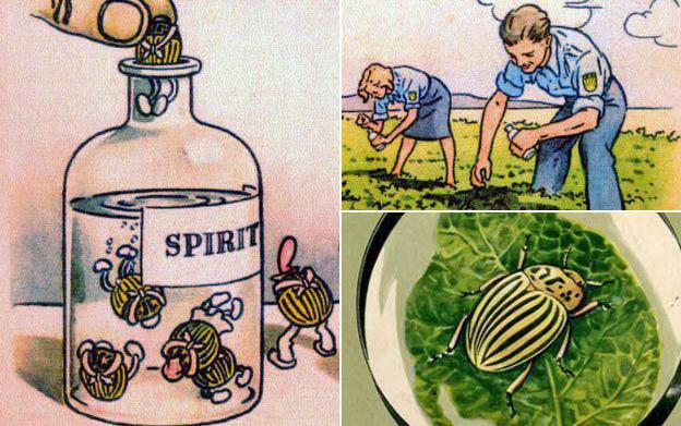 Колорадский жук смешная картинка, приколами день рождения