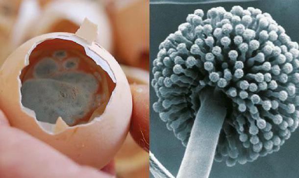 aspergillus schimmel symptomen