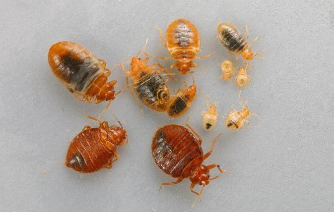 личинки паразитов человека