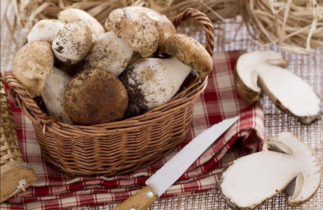 свежие грибы заморозить в морозилке можно