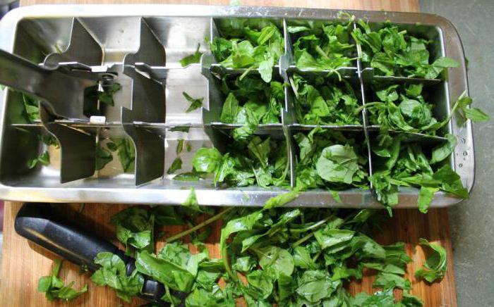 Как сохранить рукколу на зиму: сушить или морозить? Чем полезна руккола