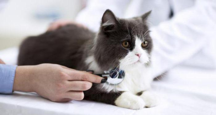 герпес у кошек симптомы