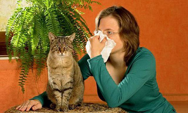 аллергия на шерсть животных симптомы