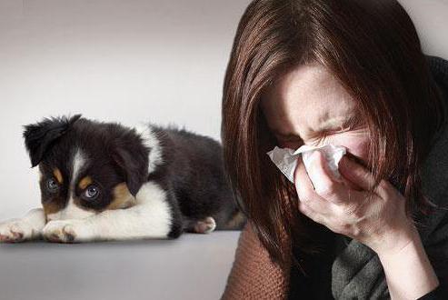 как проявляется аллергия на шерсть животных