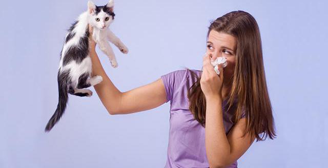 как вылечить аллергию на шерсть животных