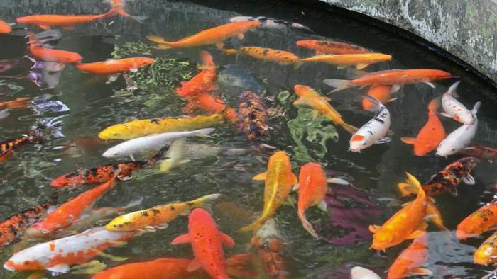 рыба на даче