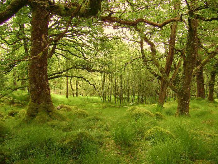 жестколистные и вечнозеленые леса и кустарники