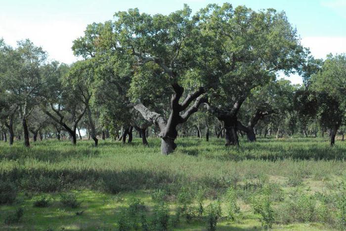 жестколистные и вечнозеленые леса и кустарники географическое положение