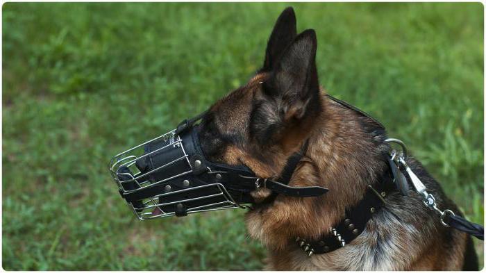 знакомства с собаками для выгула