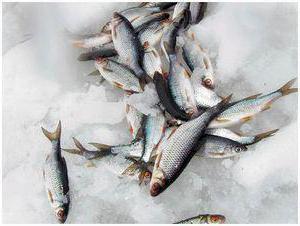 прикормка белую рыбу фидер