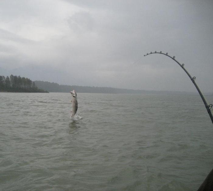 способы рыбалки на енисее
