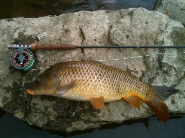 где поймать толстолобика в русской рыбалке 3
