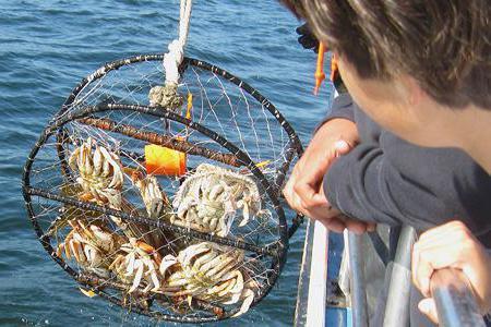 рыбалка на больших крабов
