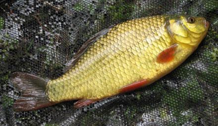 где хорошо клюет рыба
